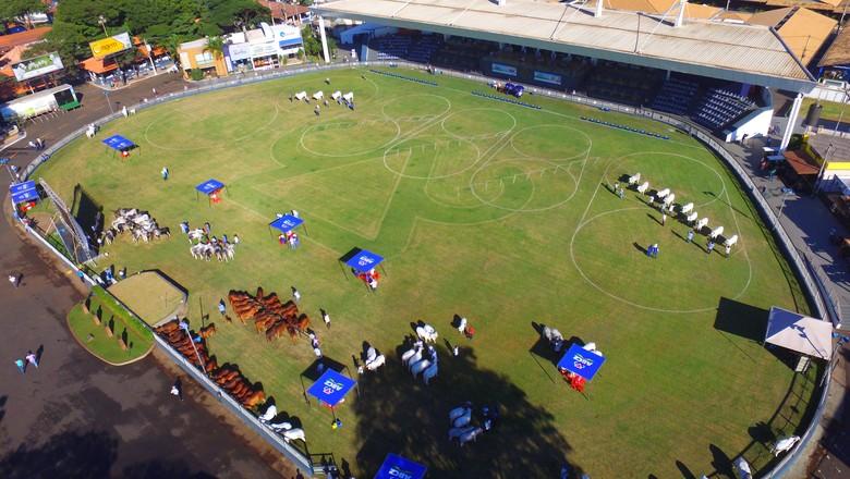 boi-expozebu-pista-julgamento (Foto: Fábio Garcia/Divulgação)