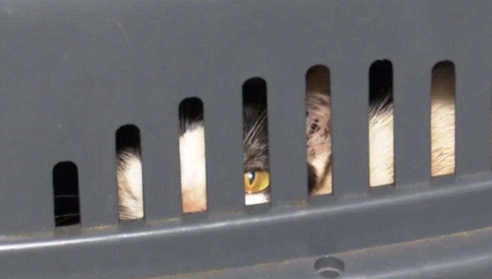 Nove gatos estavam presos em caixas — Foto: Reprodução / TV Santa Cruz