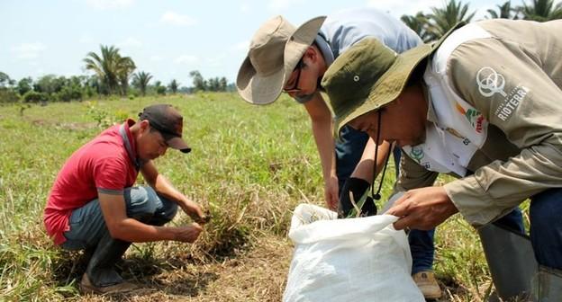 Pesquisadores fazem expedição para medir carbono armazenado na Amazônia