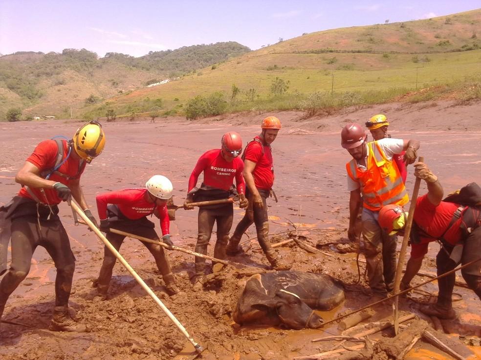 Sargento Daniel Batista de capacete vermelho, ao centro, durante trabalho na lama em Mariana — Foto: Daniel Batista/Arquivo Pessoal