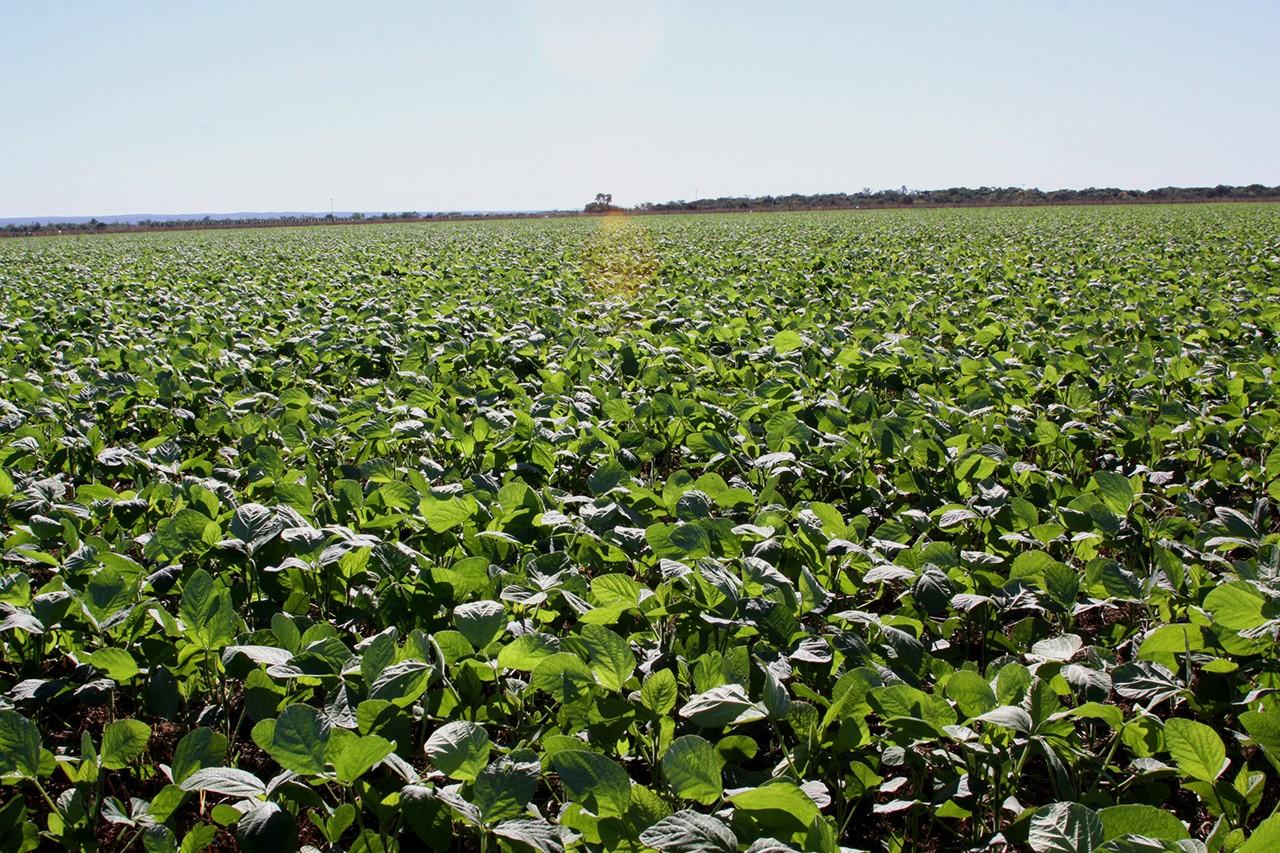 Pastagens subutilizadas podem ampliar área de soja no Cerrado por mais de 10 anos sem desmatamento, diz estudo thumbnail