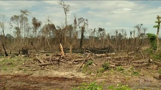 Ritmo do desmatamento na Amazônia Legal cai após 5 anos