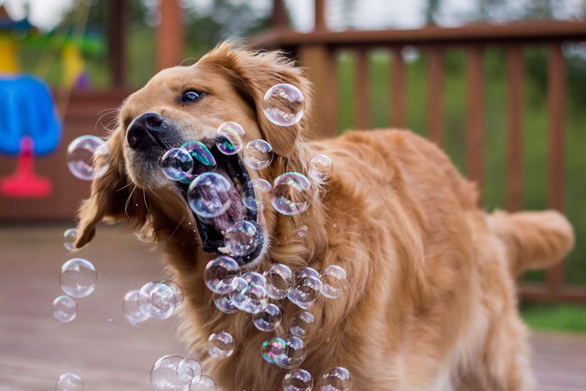 Cachorros passam pela adolescência aos 8 meses de vida (Foto: Creative commons)