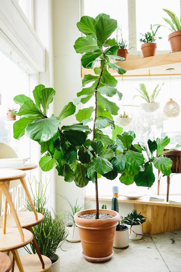 5 plantas com folhagens exuberantes para ter em casa (Foto:  Reprodução/Pinterest)
