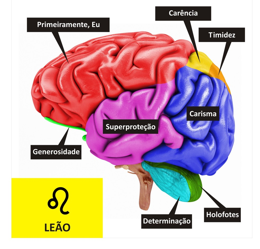 Cérebro de Leão  (Foto: TV Globo )