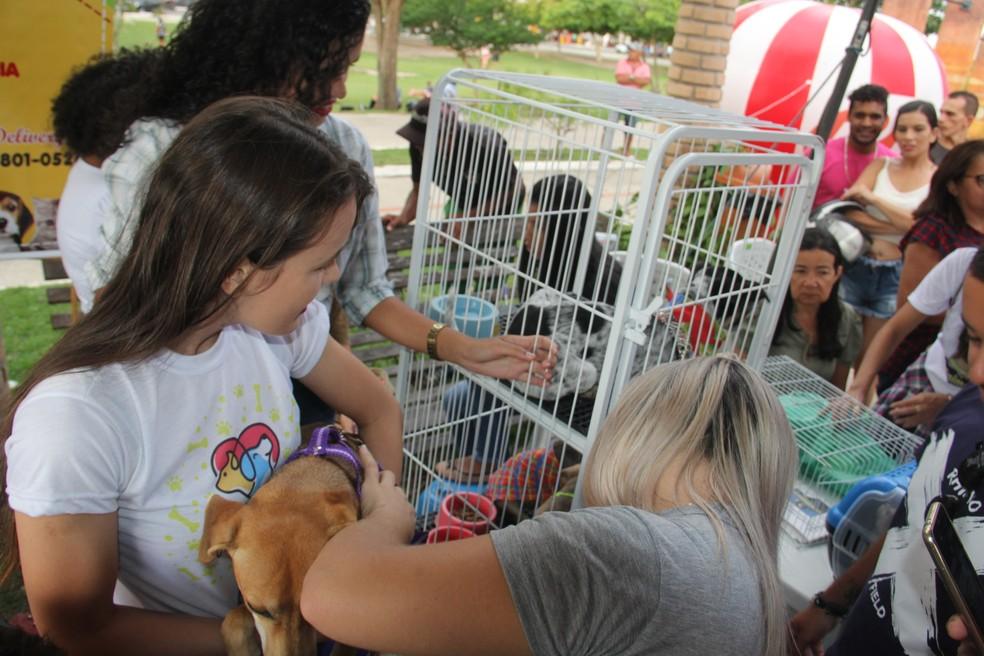 Atividade conta com feira de adoção de animais — Foto: Samuel Alves/Ascom Arapiraca