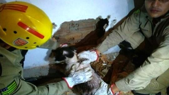 Bombeiros resgatam cachorro preso entre dois muros em Catalão