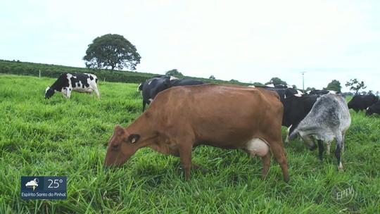 Série de reportagens mostra mudanças na agricultura e pecuária - Assista o 1° episódio