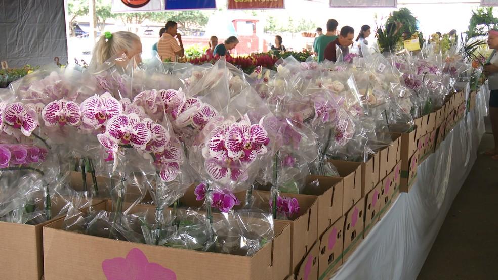 Segundo organização, as orquídeas são as mais procuradas e compradas pelo público visitante.  — Foto: Rede Amazônica/Reprodução