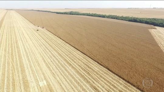Supersafra de grãos no Brasil deve passar de 240 milhões de toneladas
