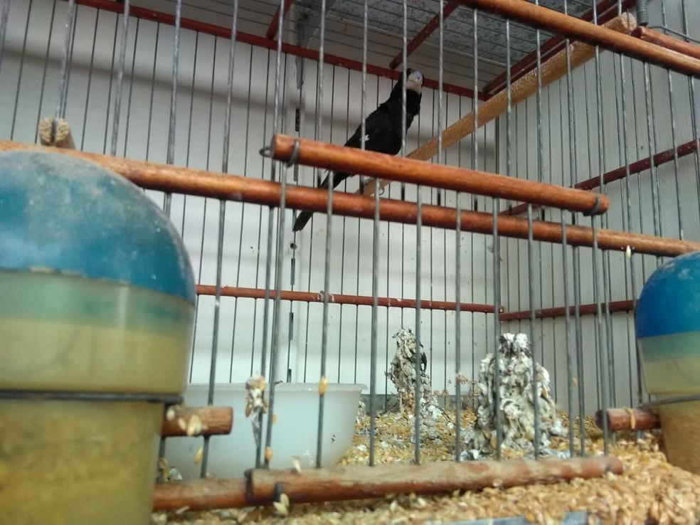 Alguns animais tinham sinais de captura recente (Foto: Polícia Ambiental/Divulgação )