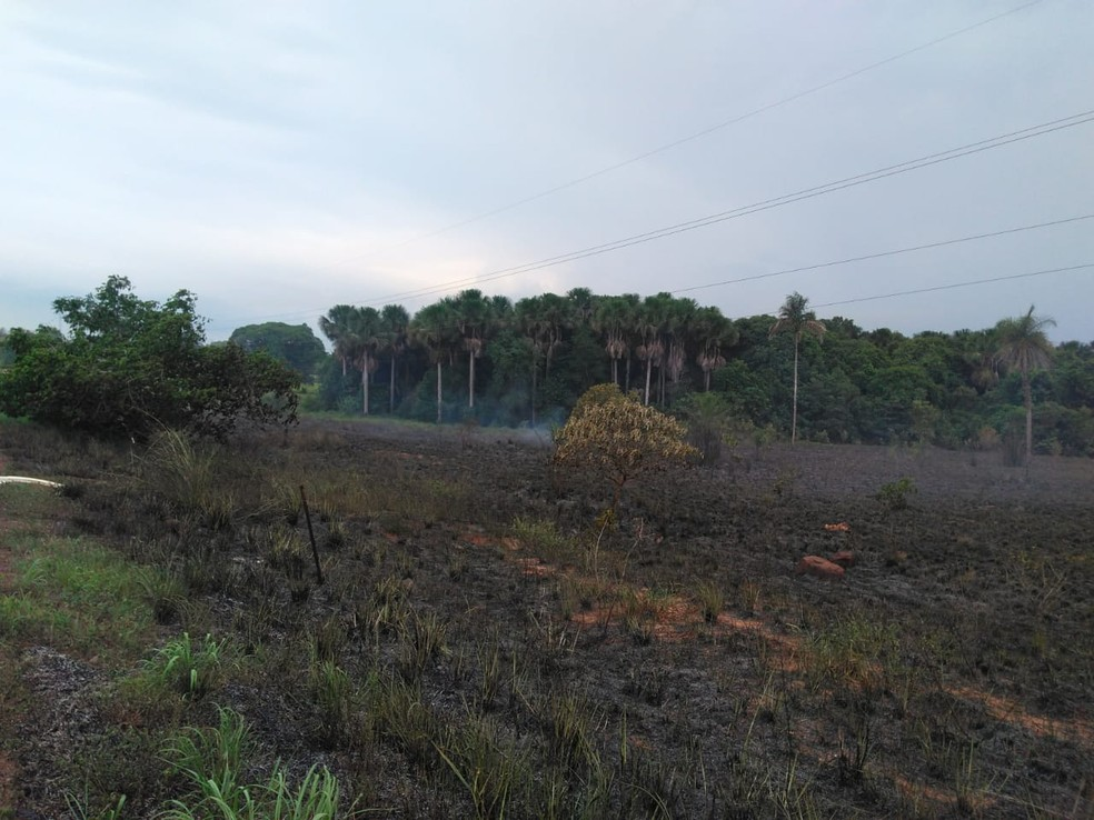 Segundo os Bombeiros, chamas se espalharam e atingiram vegetação às margens de todovia — Foto: Divulgação/Bombeiros