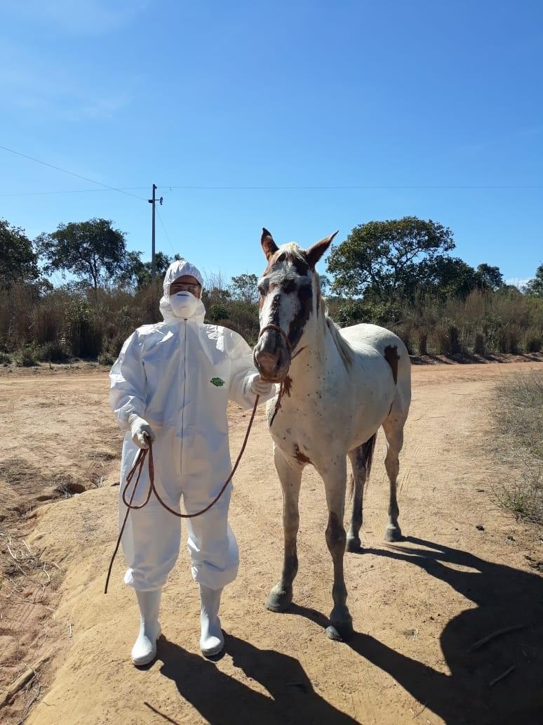 Governo proíbe cavalgadas e tropeadas em 12 cidades do estado devido ao risco de transmissão do mormo
