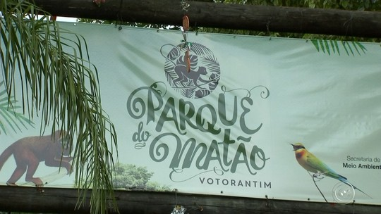 Zoonoses de Votorantim retira dois macacos mortos do Parque do Matão
