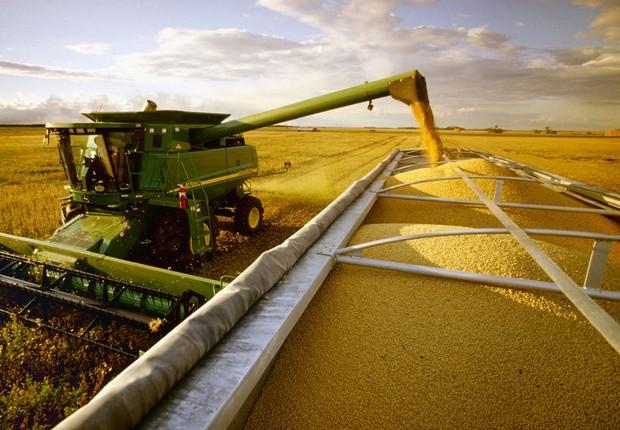 Agronegócio ; safra de grãos ; colheita de soja ; trabalho no campo ;  (Foto: Divulgação)