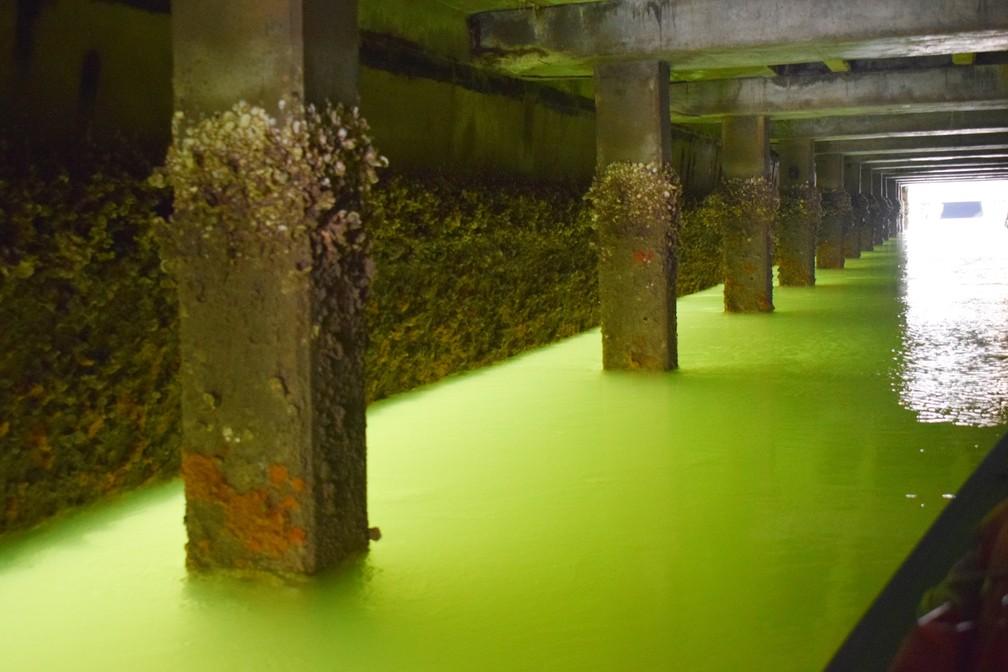 Com a maré baixa é possível passar sob o trapiche da Petrobras. A luz que entra por baixo cria um efeito de aquário no fundo do rio (Foto: Maxwell Almeida)
