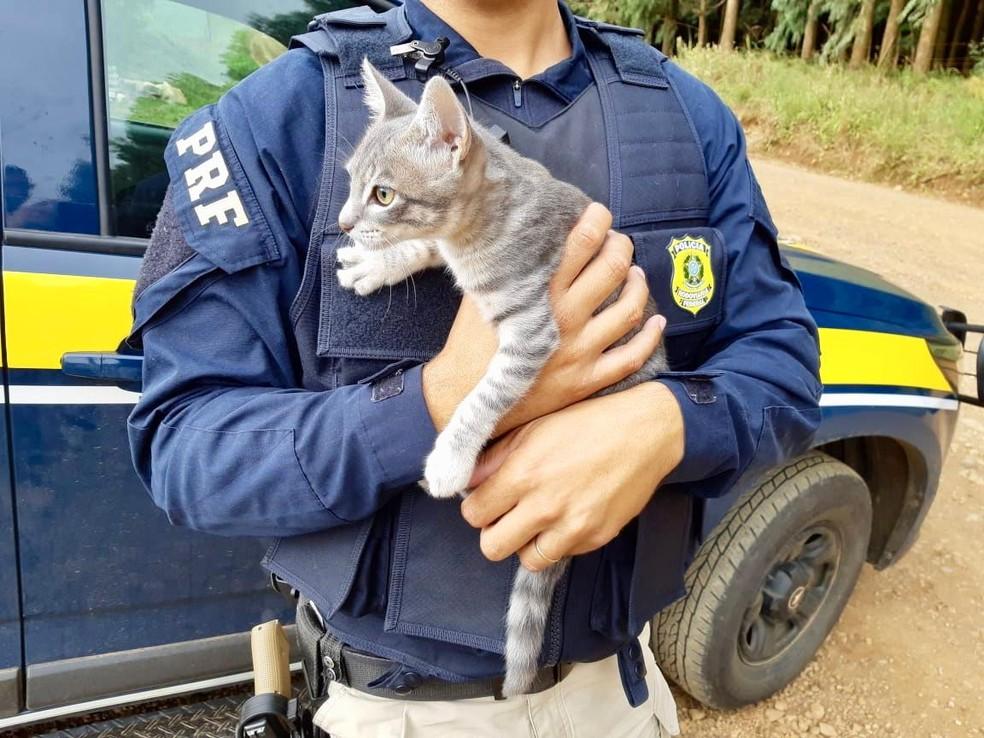 Homem tentava abandonar gato na beira da BR-116, em Vacaria — Foto: Divulgação/PRF