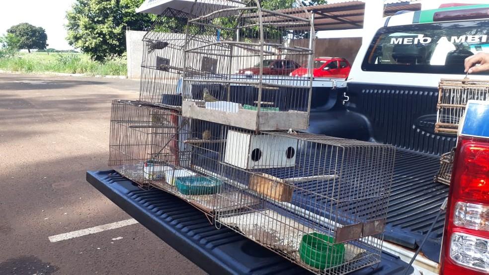 Animais foram soltos no habitat natual — Foto: Polícia Militar/Divulgação