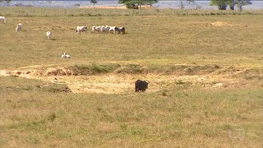 Produtores de Sergipe perdem metade da colheita por causa da seca