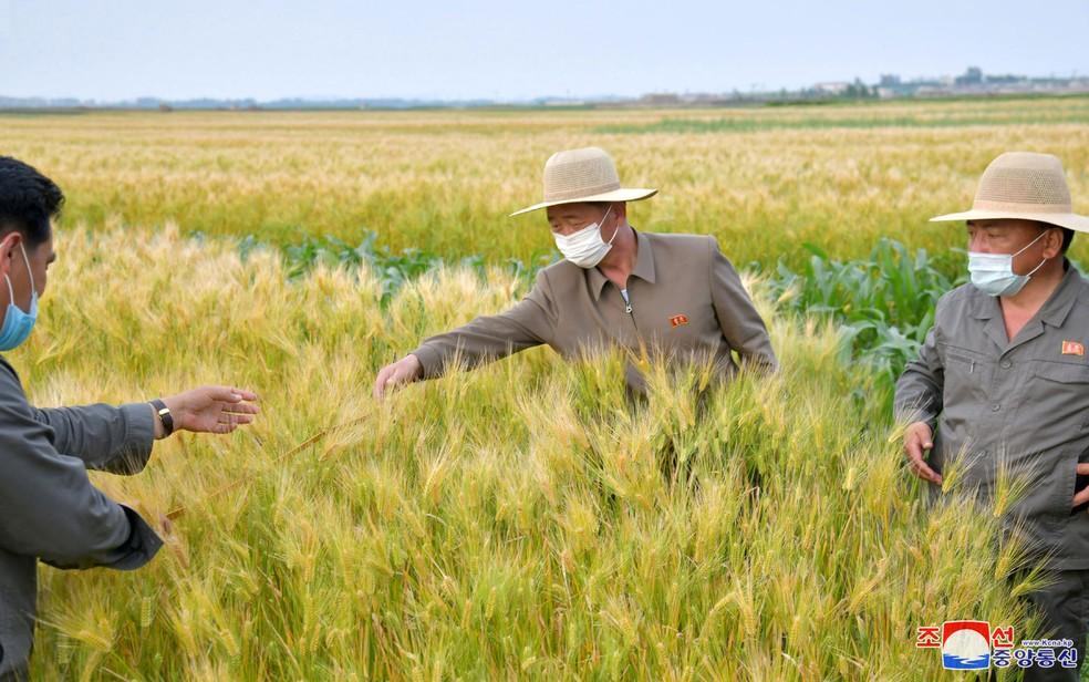 Autoridades norte-coreanas visitam uma área agrícola no interior do país, em junho — Foto: KCNA/via Reuters