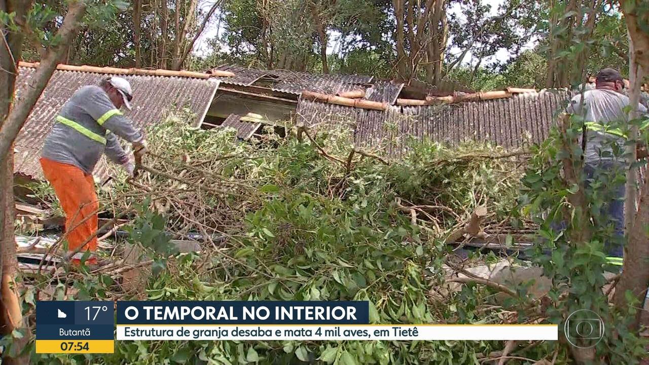 Mais de 4 mil aves morrem após desabamento em Tietê