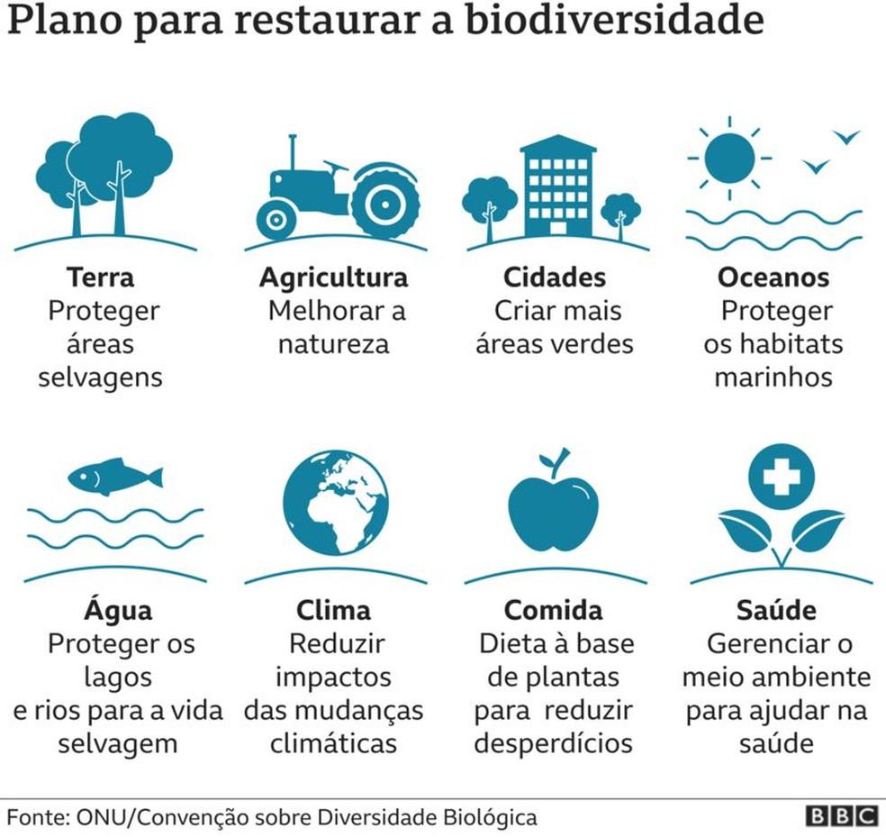 Plano para restaurar a biodiversidade  — Foto: BBC