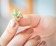Aprenda como plantar suculentas pela folha