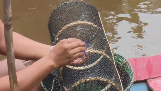 Armadilha sintética para pesca garante reprodução adequada do camarão no interior do AP