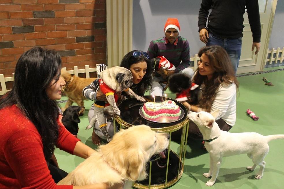 Aniversário de um dos cães do hotel de luxo canino na Índia (Foto: Critterati/Divulgação)