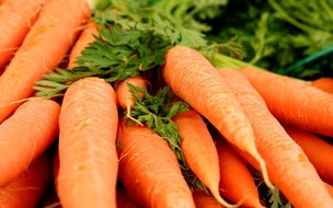 5 raízes fáceis de plantar que fazem bem à saúde