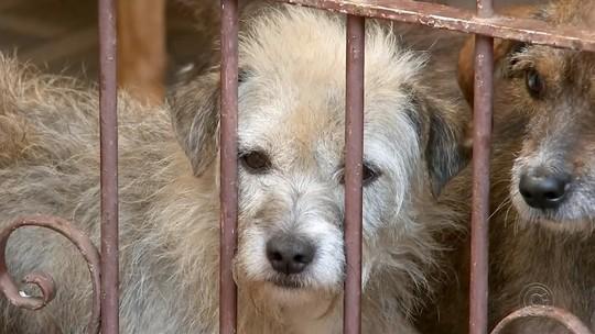 Projeto Eco Patinhas une cuidado com animais abandonados e meio ambiente