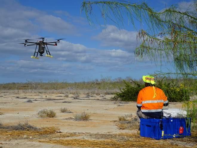 Drones podem chegar em áreas de difícil acesso para eliminar os ratos das Ilhas Galápagos (Foto: Island Conservation)