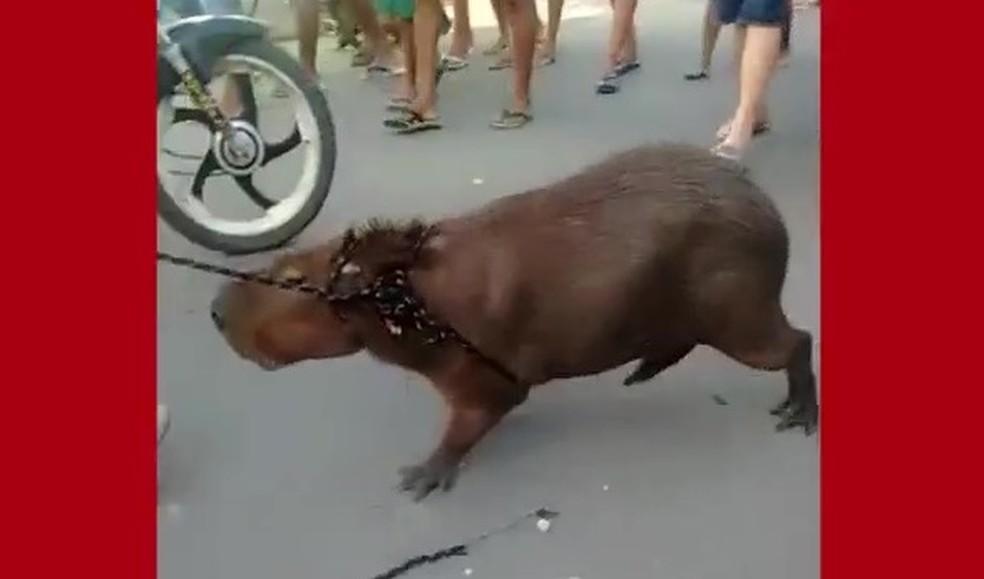 Animal foi arrastado por rua em Fortaleza antes de ser morto (Foto: Reprodução)