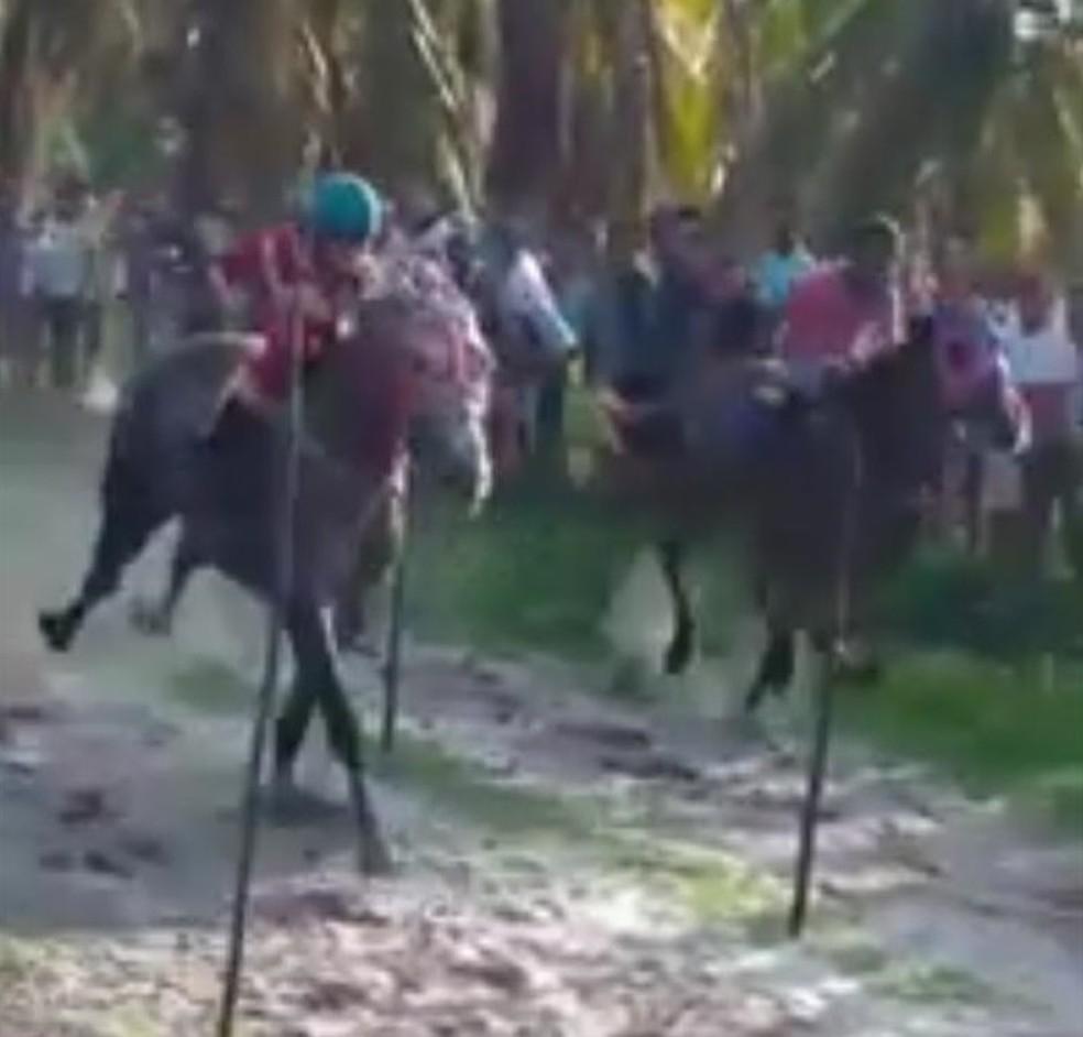 Criança cai e morre em queda de cavalo durante corrida no interior do Ceará — Foto: TV Verdes Mares/Reprodução