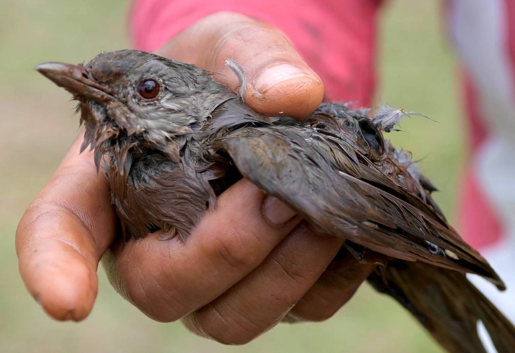 27 de janeiro - Homem segura pássaro sujo de lama após tragédia em mina da Vale, em Brumadinho — Foto: Washington Alves/Reuters