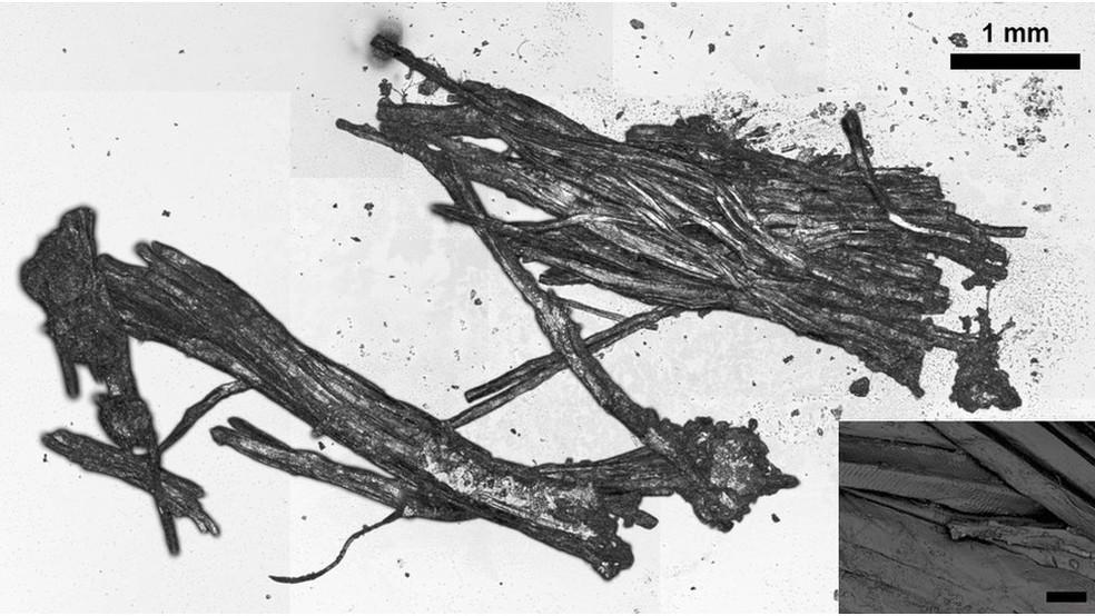 Análise do tecido da múmia permitiu descobrir os detalhes da última refeição de Ötzi (Foto: Institute for Mummy Studies/Eurach Research/Frank M)