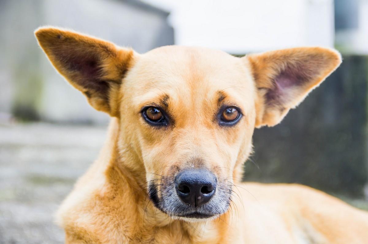 Prefeitura de Arcoverde promove ação de castração de animais - G1