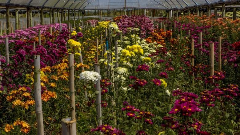 Produção de flores no RJ (Foto: Moskow/GovRJ)