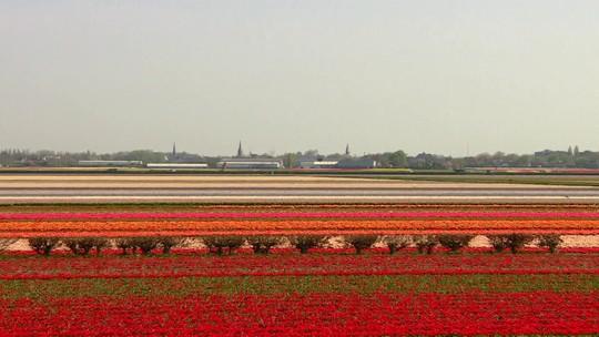"""""""Holanda: terra, água e ar"""": série mostra a história e as belezas desse país pequeno e encantador"""