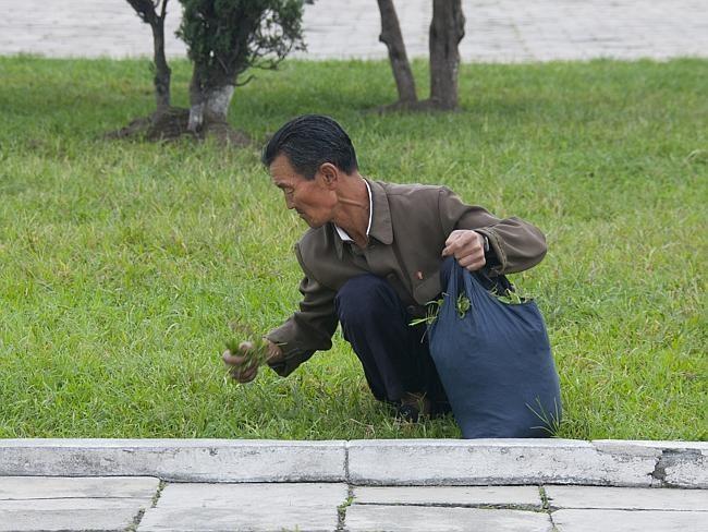 A pobreza é tão grande que as pessoas vão aos parques comer grama e encher sacolas para levar para casa. (Foto: Eric Lafforgue)