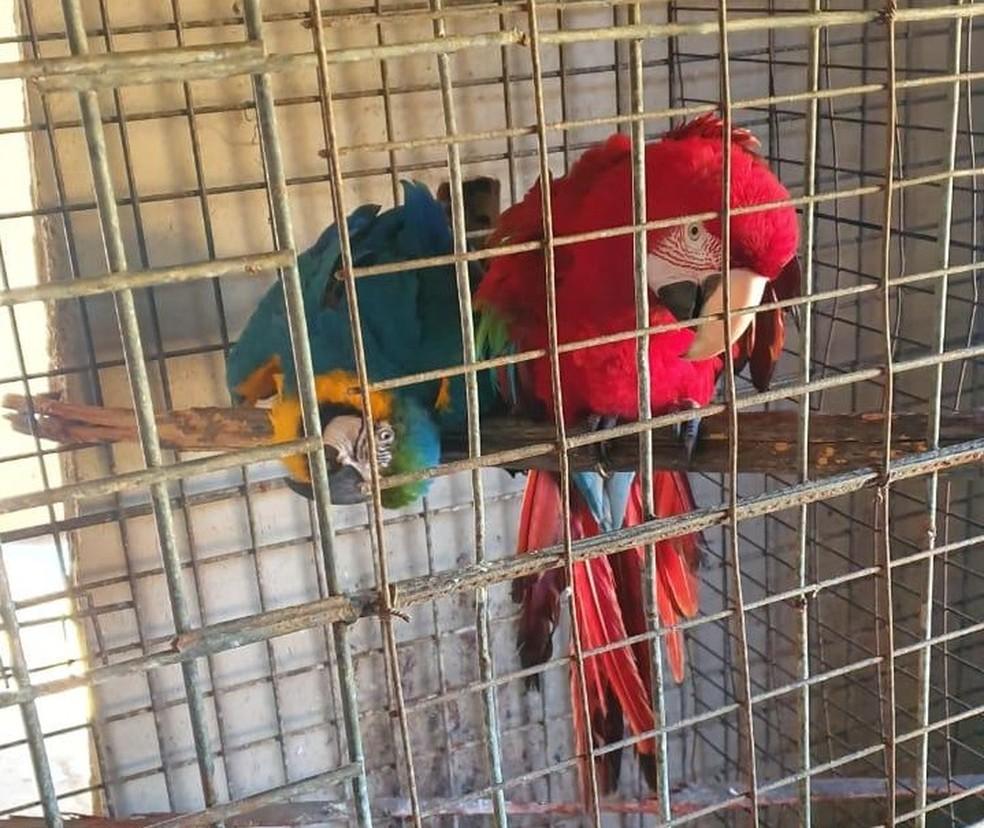As aves foram encontradas presas em gaiolas — Foto: João Pedro Ribeiro/ Sistema Verdes Mares