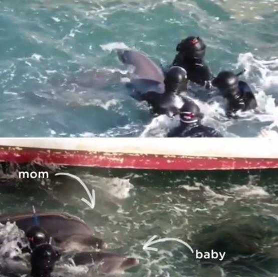 A luta da mamãe golfinho para salvar seu bebê