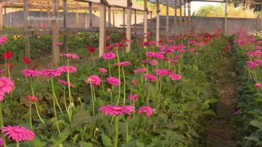 Cultivo de flores cresce em Vilhena
