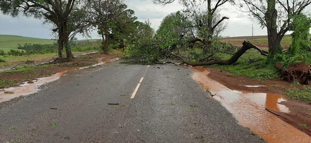 Árvores caíram na BR-369., em Bandeirantes — Foto: Adenilson Fernandes/Rádio Yara