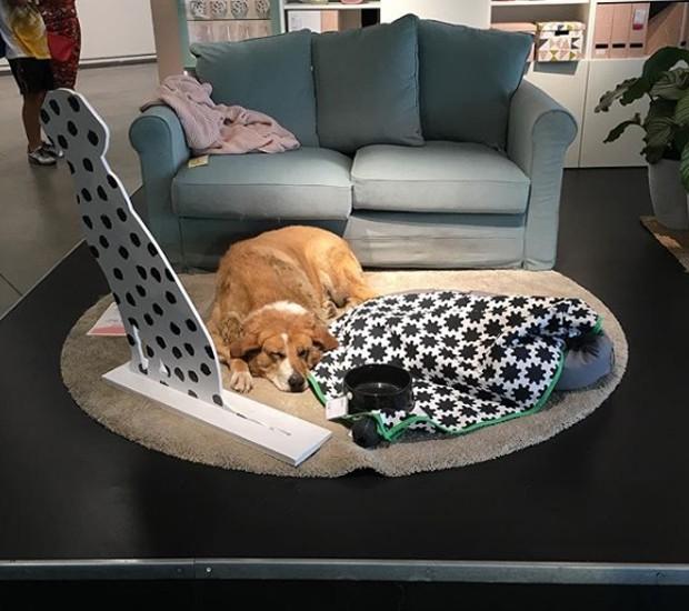 A loja da IKEA, na cidade de Catania, na Itália, abriga cães abandonados (Foto: Instagram/ Reprodução)