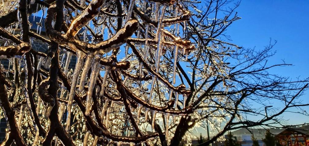 Árvores amanhecem cobertas de gelo em São Joaquim — Foto: Mycchel Legnaghi