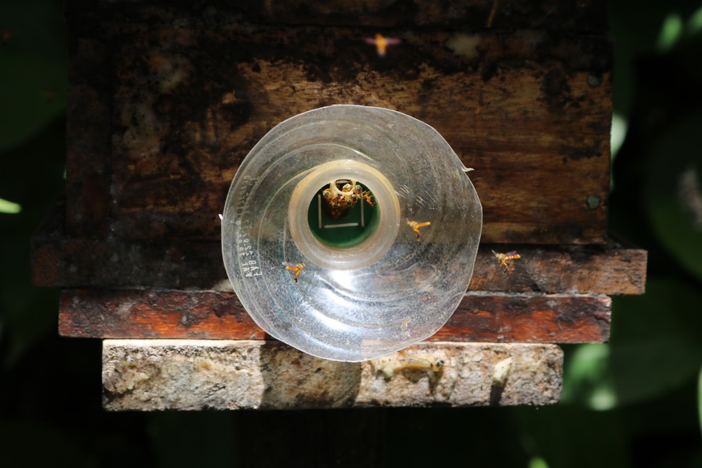 Entrada da caixa para a colmeia das abelhas Jataí — Foto: Emater-DF /Divulgação