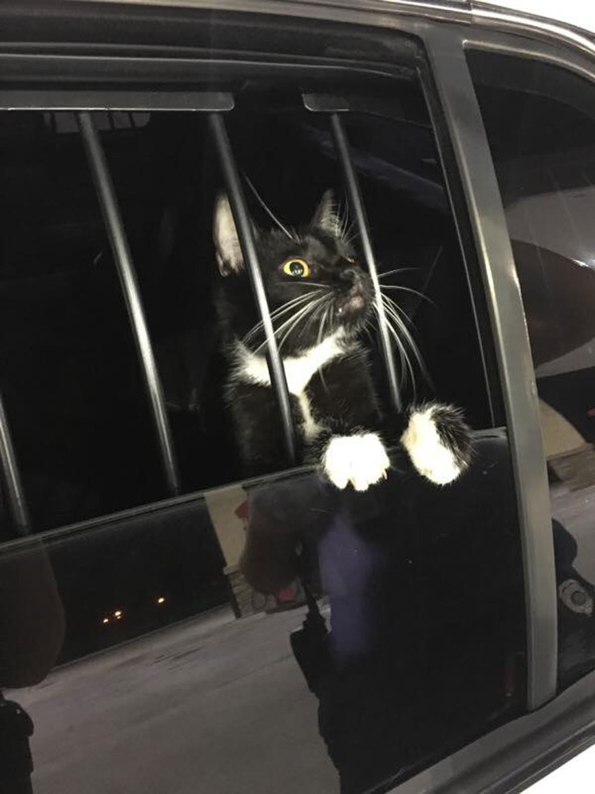 Gato é 'preso' suspeito de furto nos EUA