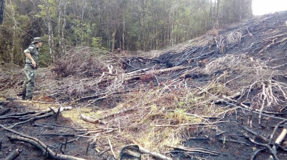 Operação contra desmatamento na Mata Atlântica que identificou 688 hectares de floresta devastada ilegalmente no Paraná, em setembro de 2019 — Foto: Reprodução/RPC