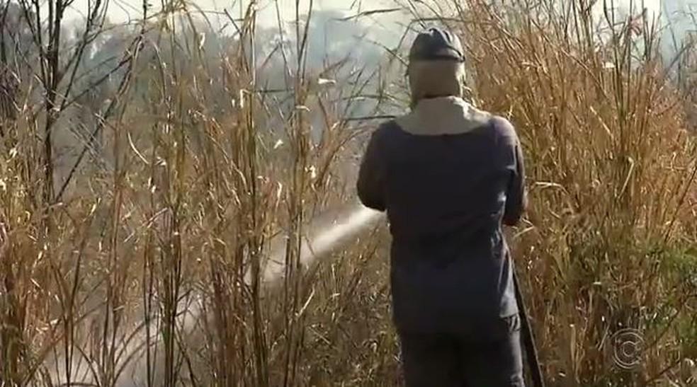 Incêndio atingiu reserva ambiental de Castilho (SP) (Foto: Reprodução/TV TEM)